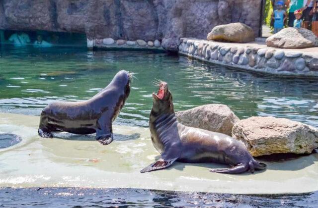 uchatki zoo opole