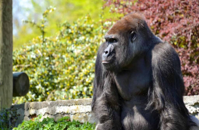 goryl zoo opole