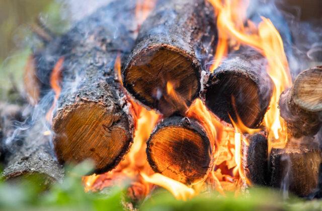 kolacja degustacyjna - drzewo, ogień